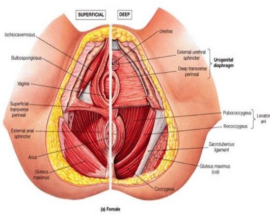 درمان اختلال واژینیسموس در جلسات مشاوره جنسی